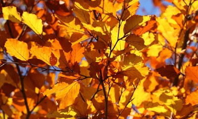 leaf-2012_1280